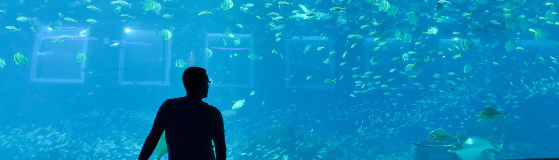 Mann vor Singapur Aquarium