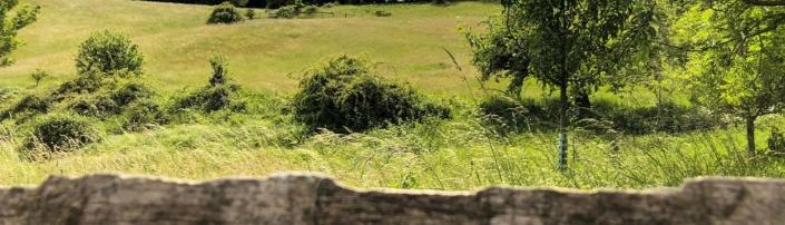 Grüne Wiese im Odenwald